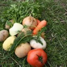 Vegetable diversity